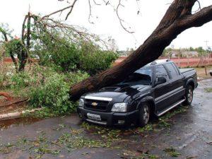 Seguro auto cobre queda de árvore?