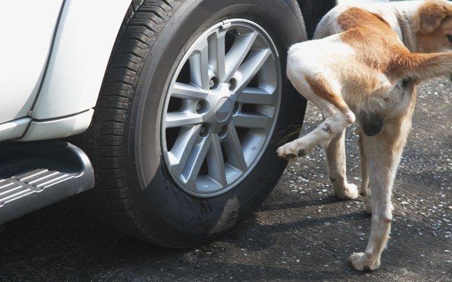 Como proteger as rodas do carro do xixi dos cachorros?