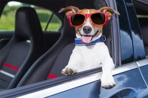 Qual o jeito certo de transportar seu pet no carro