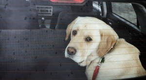 Seguro auto contra danos de animais